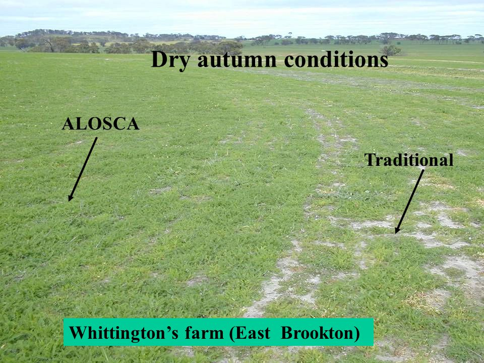 Dry autumn conditions ALOSCA Traditional