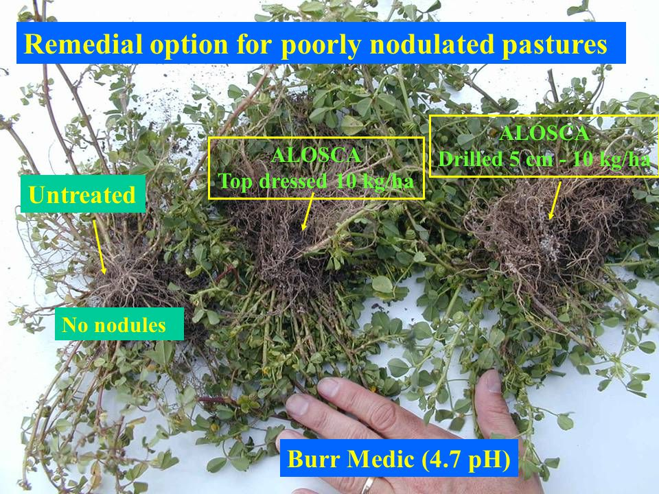 Remedial option for poorly nodulated pastures