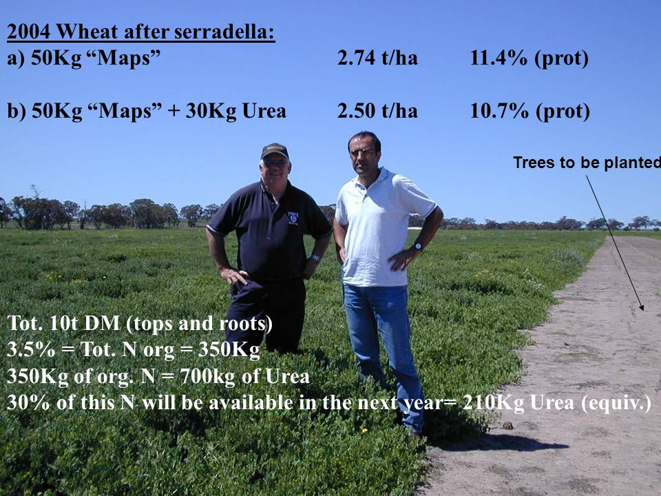 2004 Wheat after serradella: a) 50Kg Maps 2.74 t/ha 11.4% (prot)