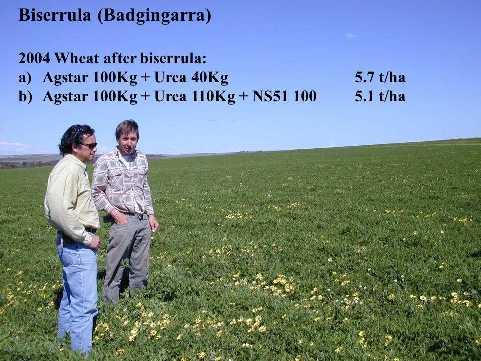 Biserrula (Badgingarra)