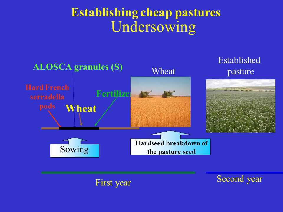 Establishing cheap pastures