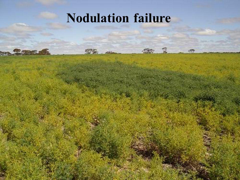 Nodulation failure