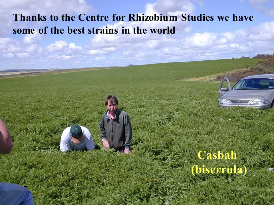Thanks to the Centre for Rhizobium Studies we have some of the best strains in the world