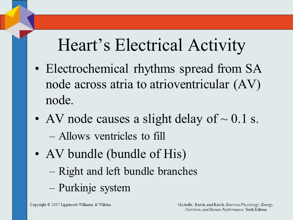 Heart's Electrical Activity