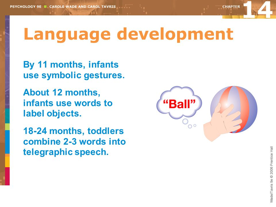 14 Language development By 11 months, infants use symbolic gestures.