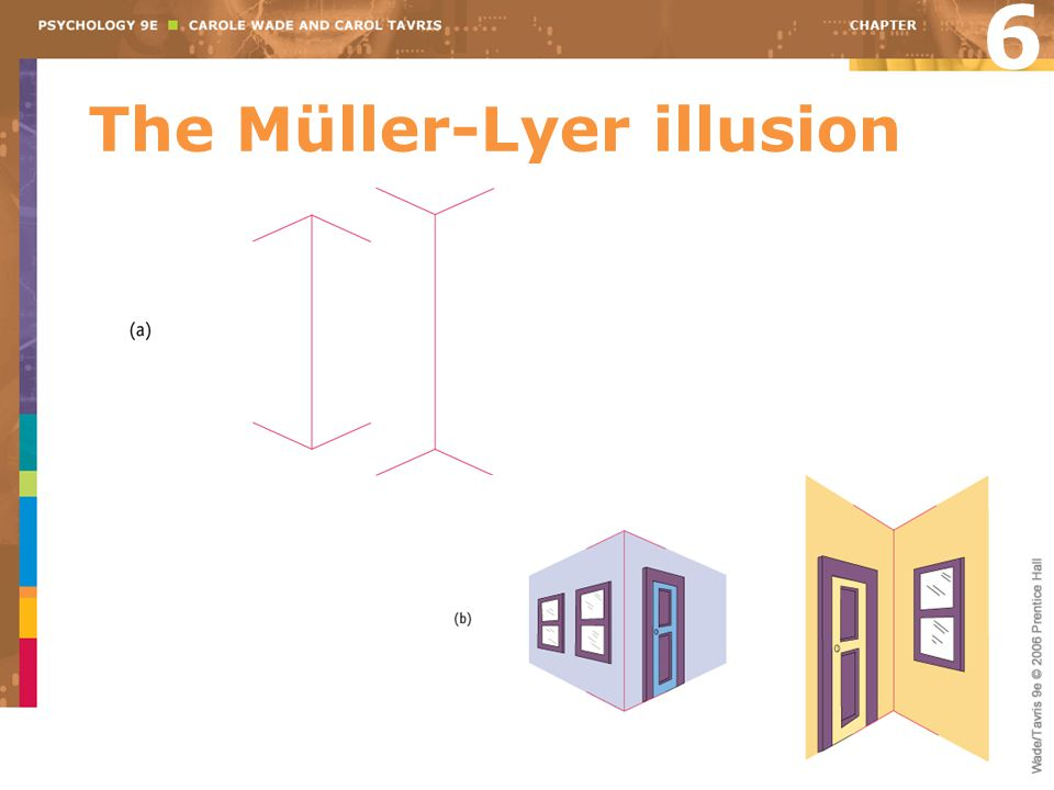The Müller-Lyer illusion