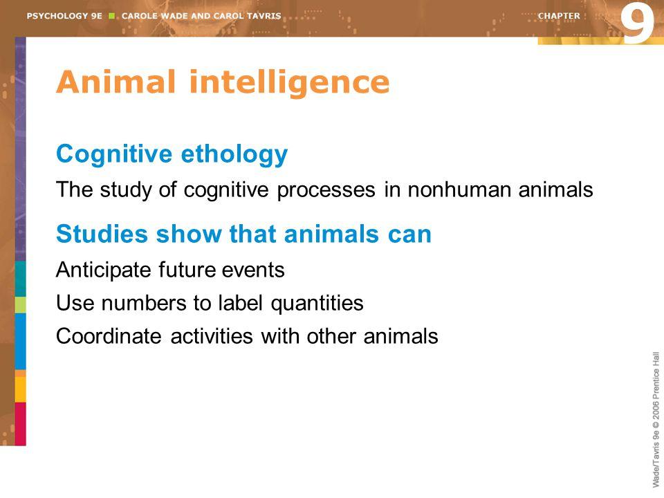 9 Animal intelligence Cognitive ethology Studies show that animals can