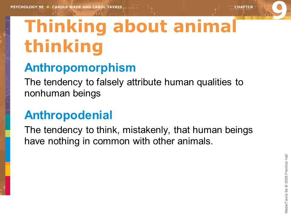 Thinking about animal thinking