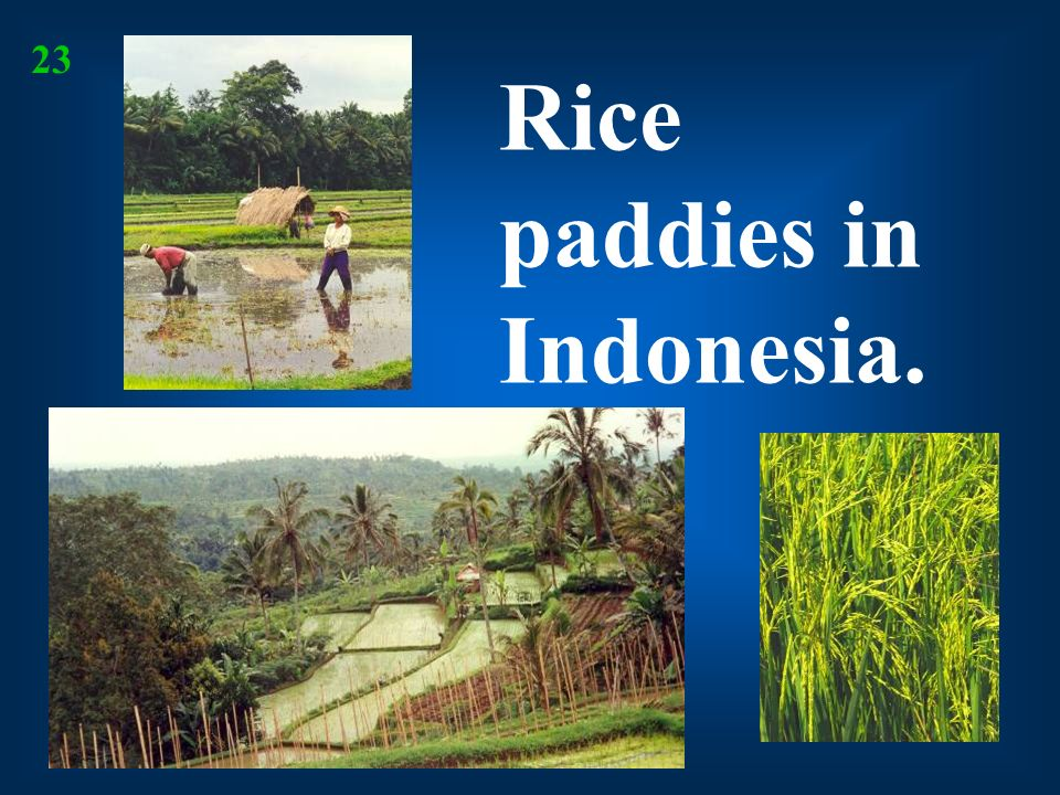 Rice paddies in Indonesia.