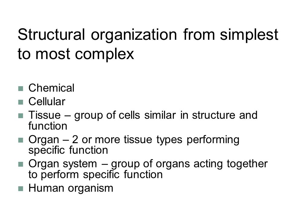 Structural organization from simplest to most complex