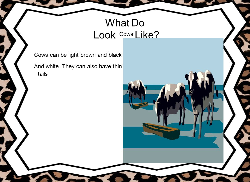 What Do Look Like Cows Cows can be light brown and black