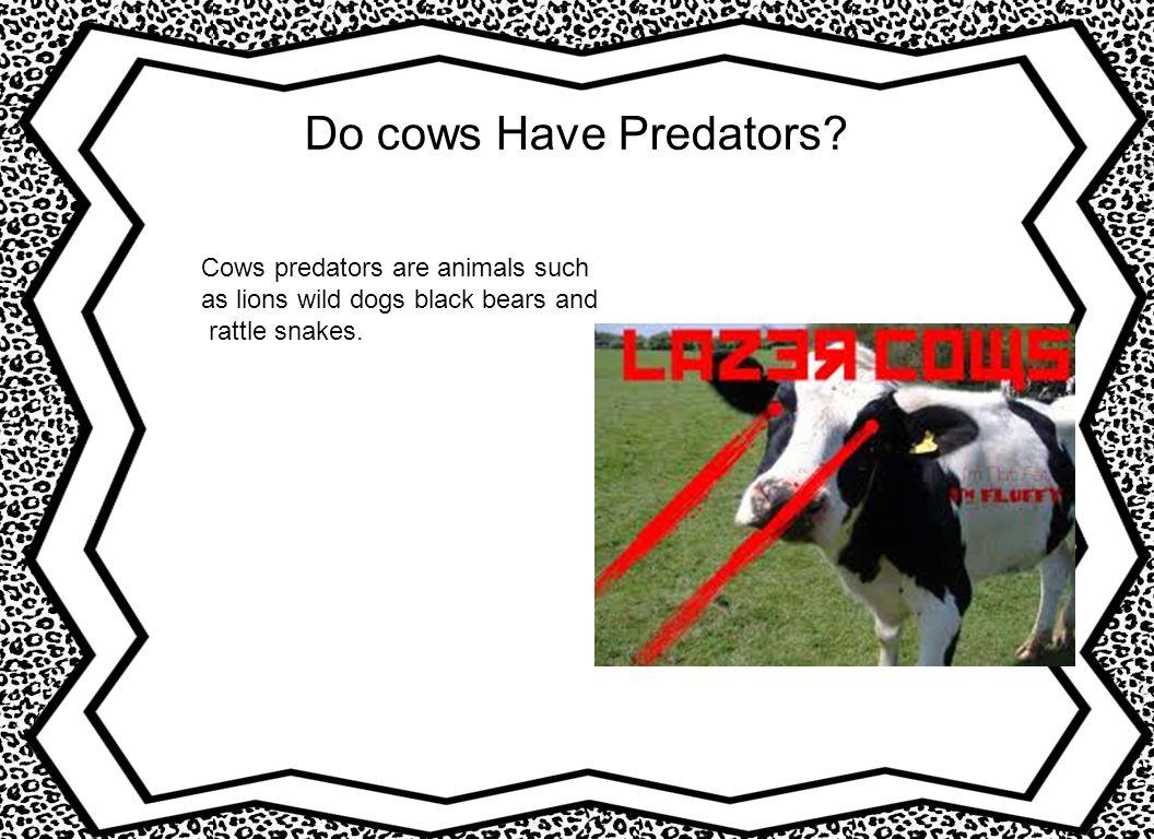 Do cows Have Predators Cows predators are animals such