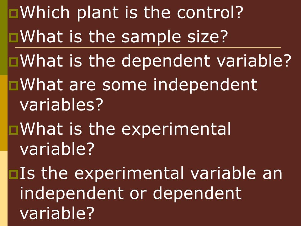 Which plant is the control