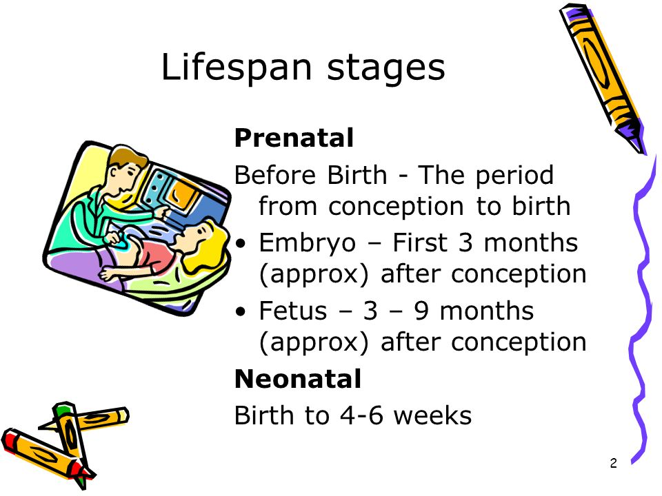 Lifespan stages Prenatal