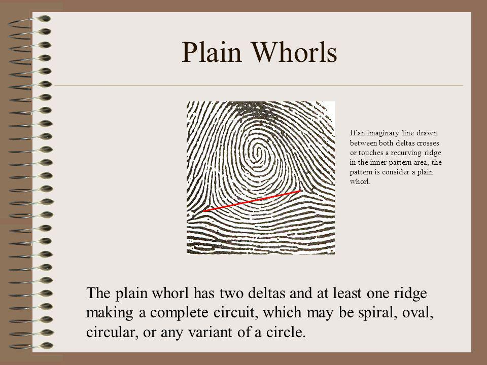 Plain Whorls