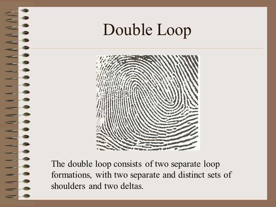 Double Loop The double loop consists of two separate loop formations, with two separate and distinct sets of shoulders and two deltas.