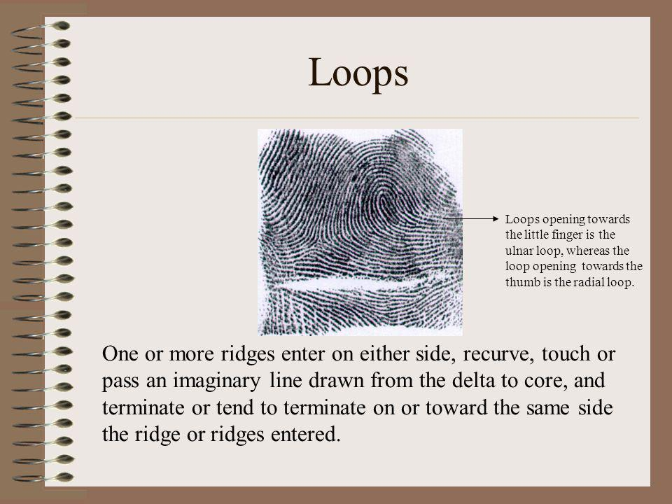 Loops Loops opening towards the little finger is the ulnar loop, whereas the loop opening towards the thumb is the radial loop.