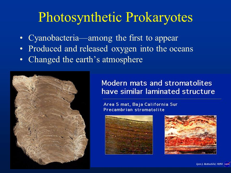 Photosynthetic Prokaryotes