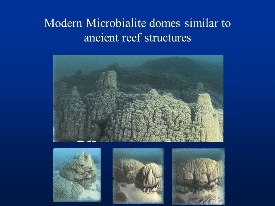 Modern Microbialite domes similar to ancient reef structures