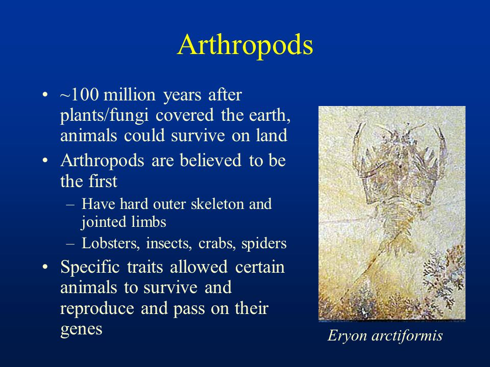 Arthropods ~100 million years after plants/fungi covered the earth, animals could survive on land. Arthropods are believed to be the first.