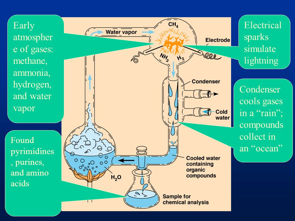 Early atmosphere of gases: methane, ammonia, hydrogen, and water vapor