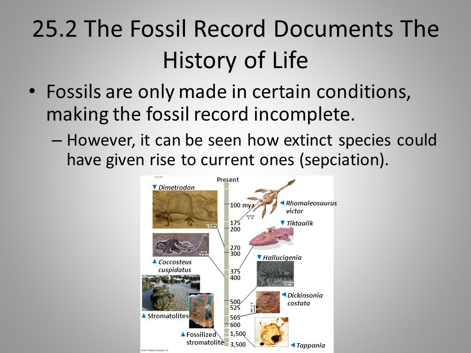 25.2 The Fossil Record Documents The History of Life