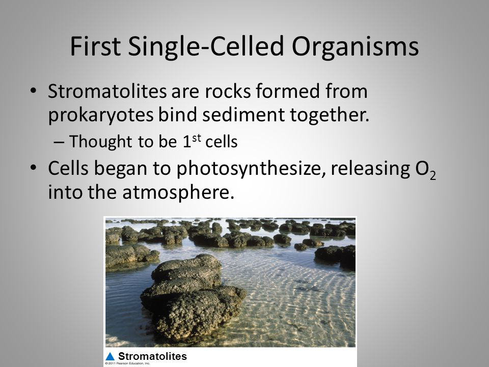 First Single-Celled Organisms
