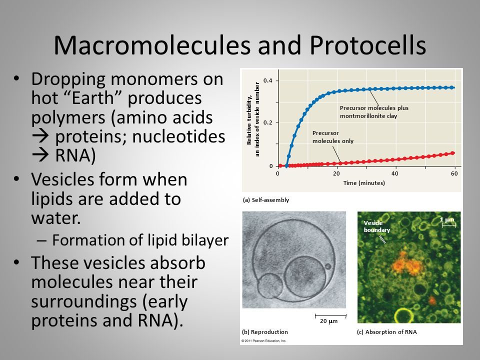 Macromolecules and Protocells