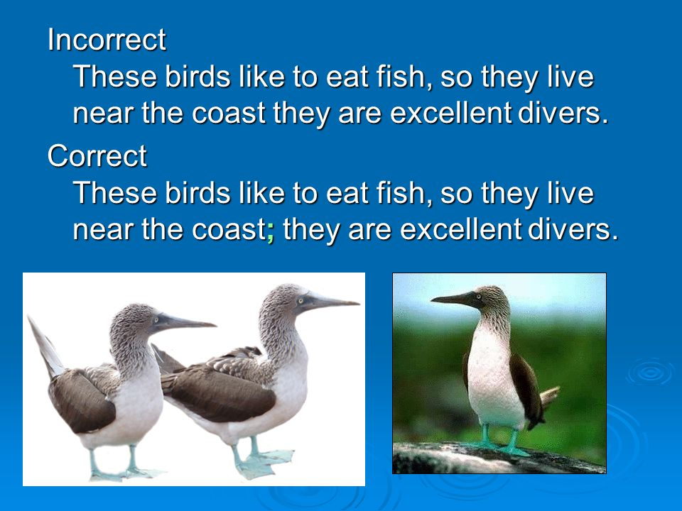 Incorrect These birds like to eat fish, so they live near the coast they are excellent divers.
