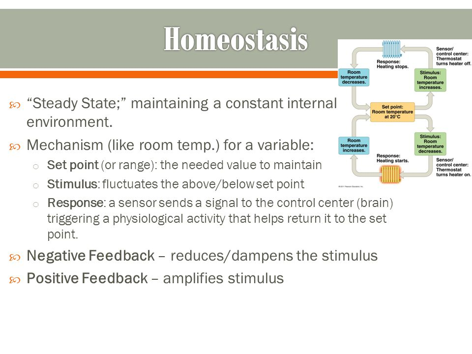 Homeostasis Steady State; maintaining a constant internal environment. Mechanism (like room temp.) for a variable: