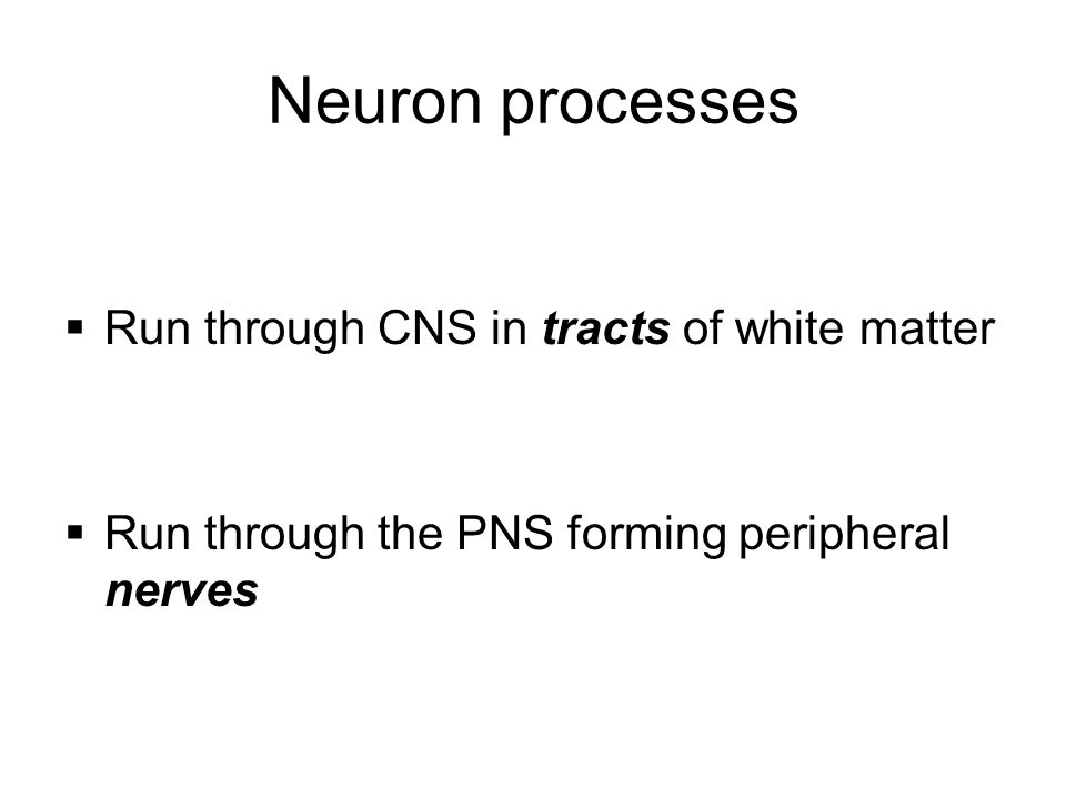 Neuron processes Run through CNS in tracts of white matter
