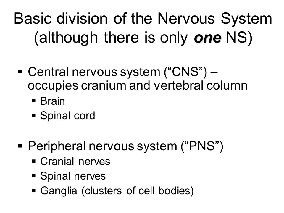 Basic division of the Nervous System (although there is only one NS)