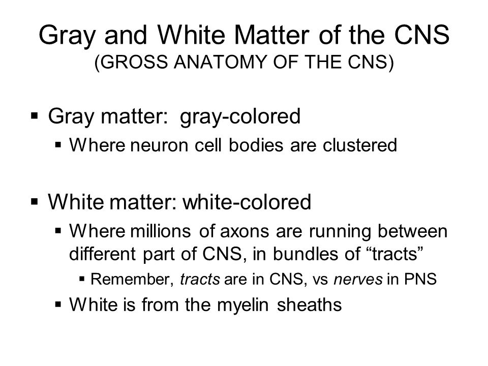 Gray and White Matter of the CNS (GROSS ANATOMY OF THE CNS)