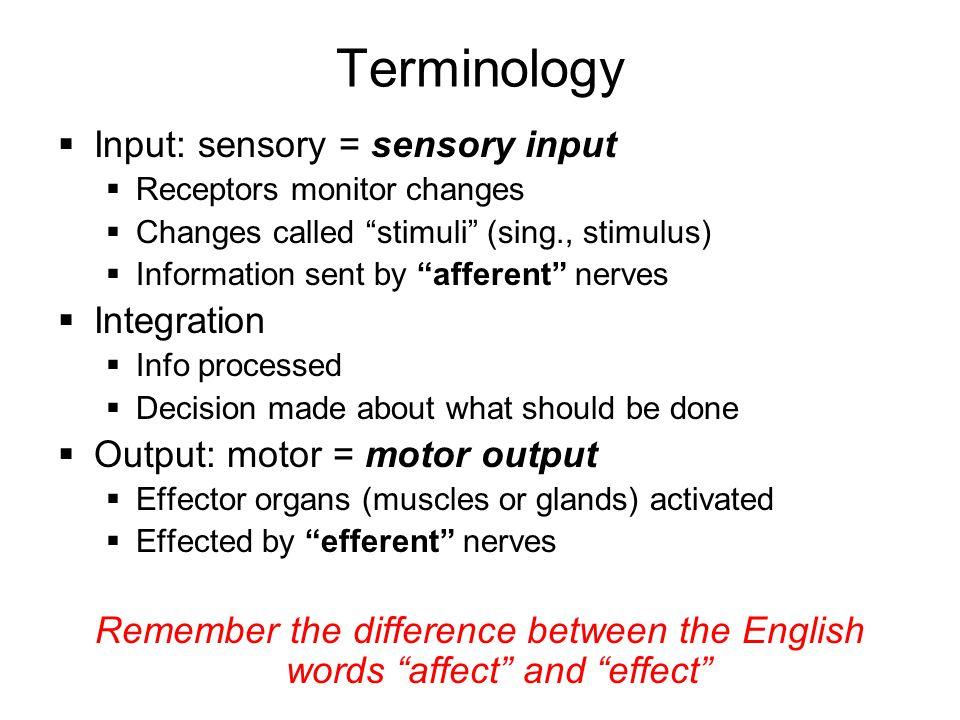 Terminology Input: sensory = sensory input Integration