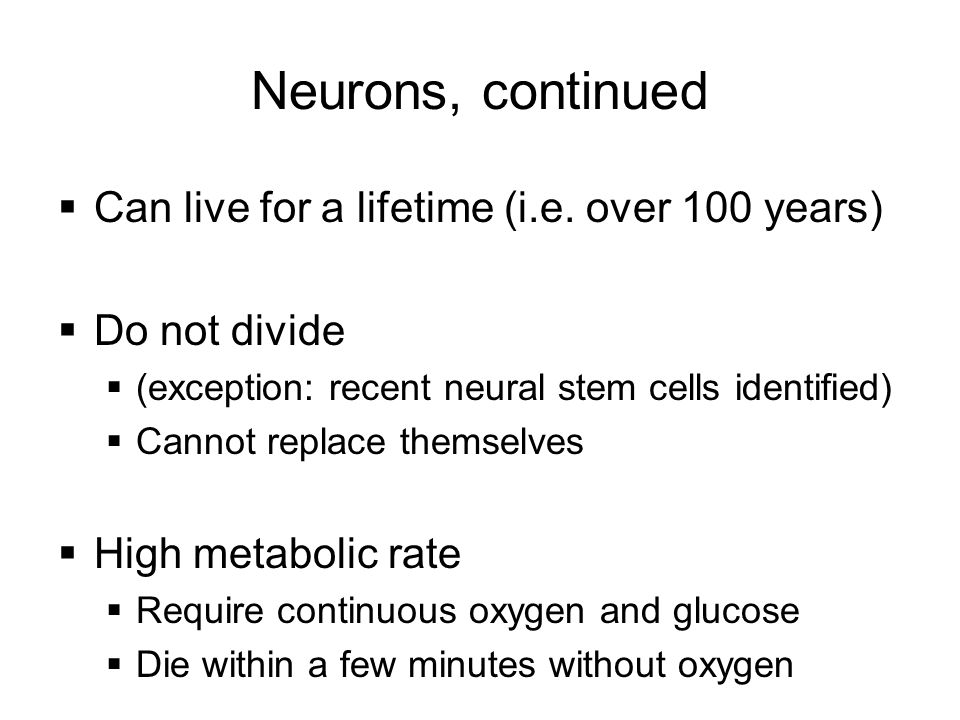 Neurons, continued Can live for a lifetime (i.e. over 100 years)