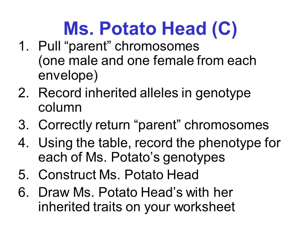 Ms. Potato Head (C) Pull parent chromosomes (one male and one female from each envelope)