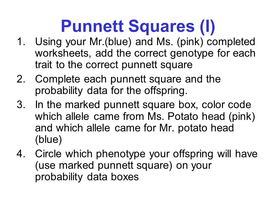Punnett Squares (I) Using your Mr.(blue) and Ms. (pink) completed worksheets, add the correct genotype for each trait to the correct punnett square.