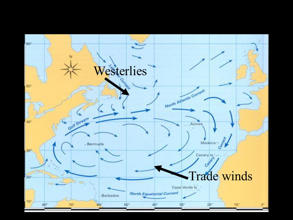 Westerlies Trade winds
