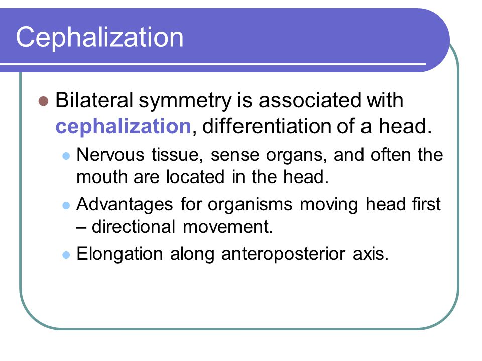 Cephalization Bilateral symmetry is associated with cephalization, differentiation of a head.