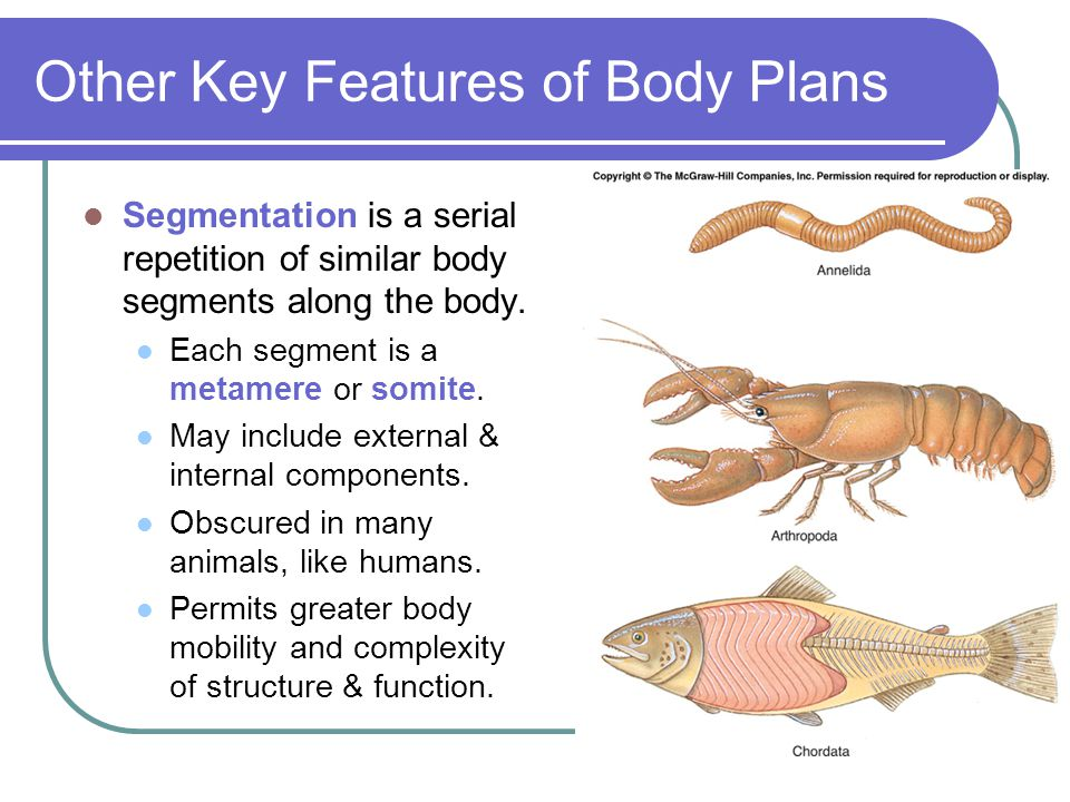 Other Key Features of Body Plans