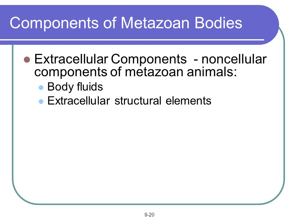 Components of Metazoan Bodies