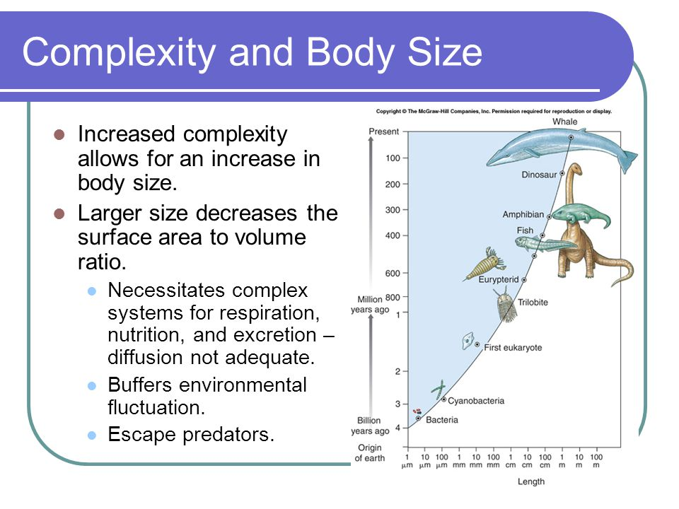 Complexity and Body Size