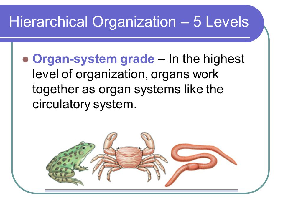 Hierarchical Organization – 5 Levels