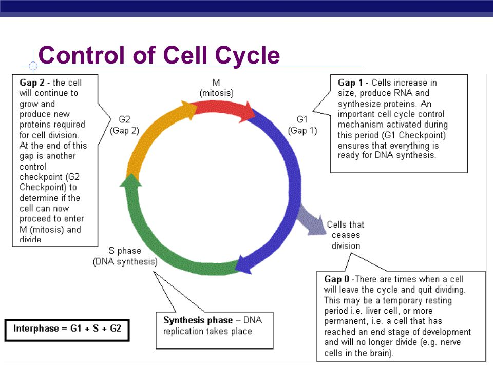 Control of Cell Cycle