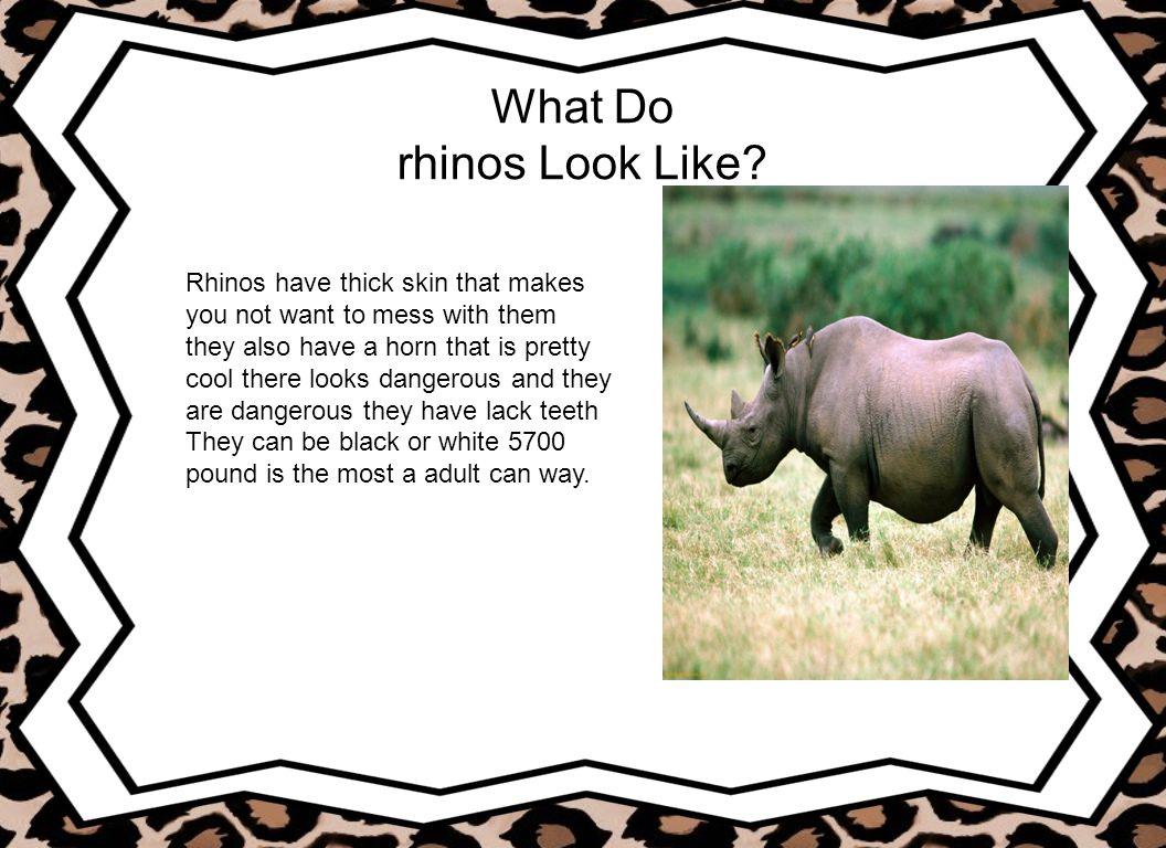 What Do rhinos Look Like
