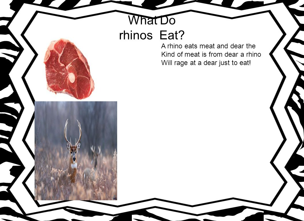 What Do rhinos Eat A rhino eats meat and dear the