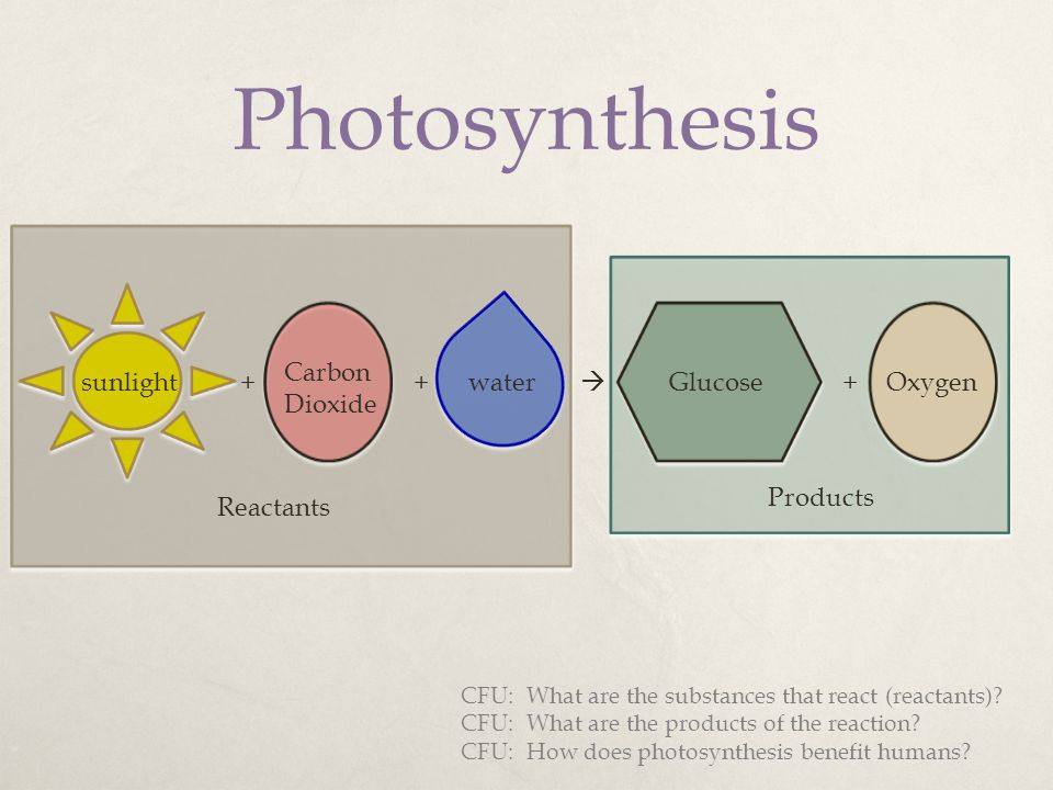 Photosynthesis Carbon Dioxide sunlight + + water  Glucose + Oxygen