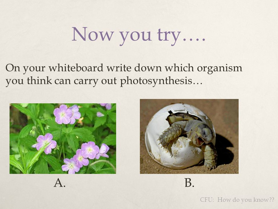 Now you try…. A. B. On your whiteboard write down which organism