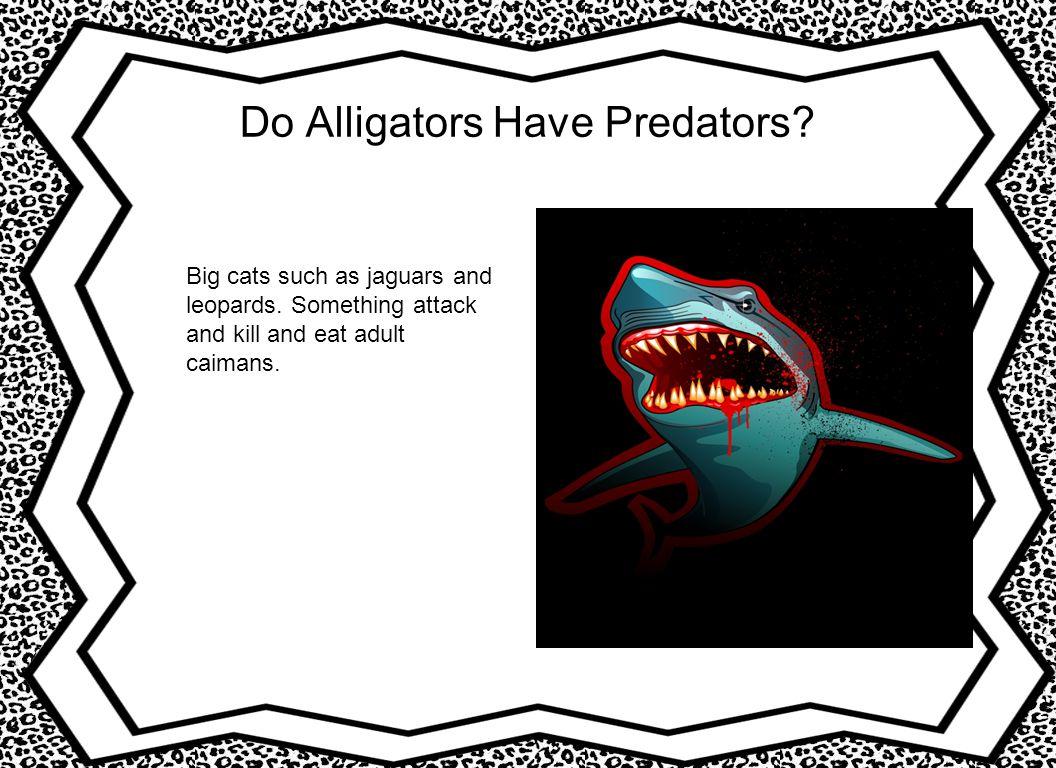 Do Alligators Have Predators