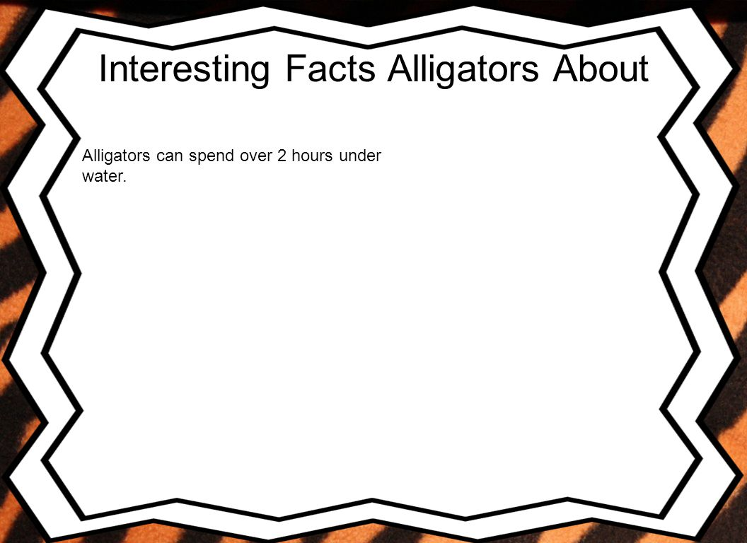 Interesting Facts Alligators About